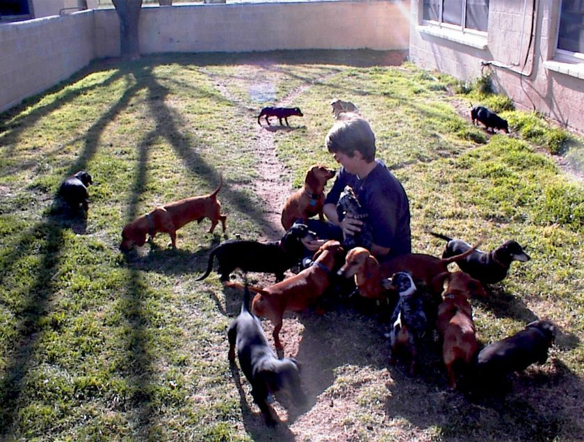 connie-in-yard-with-dogs